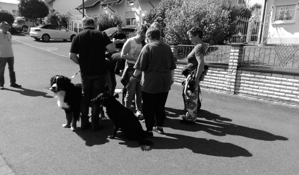 Reizüberflutung in der Hundetherapie