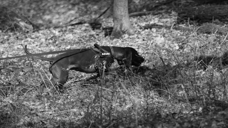 Konvektive Probleme für Suchhunde