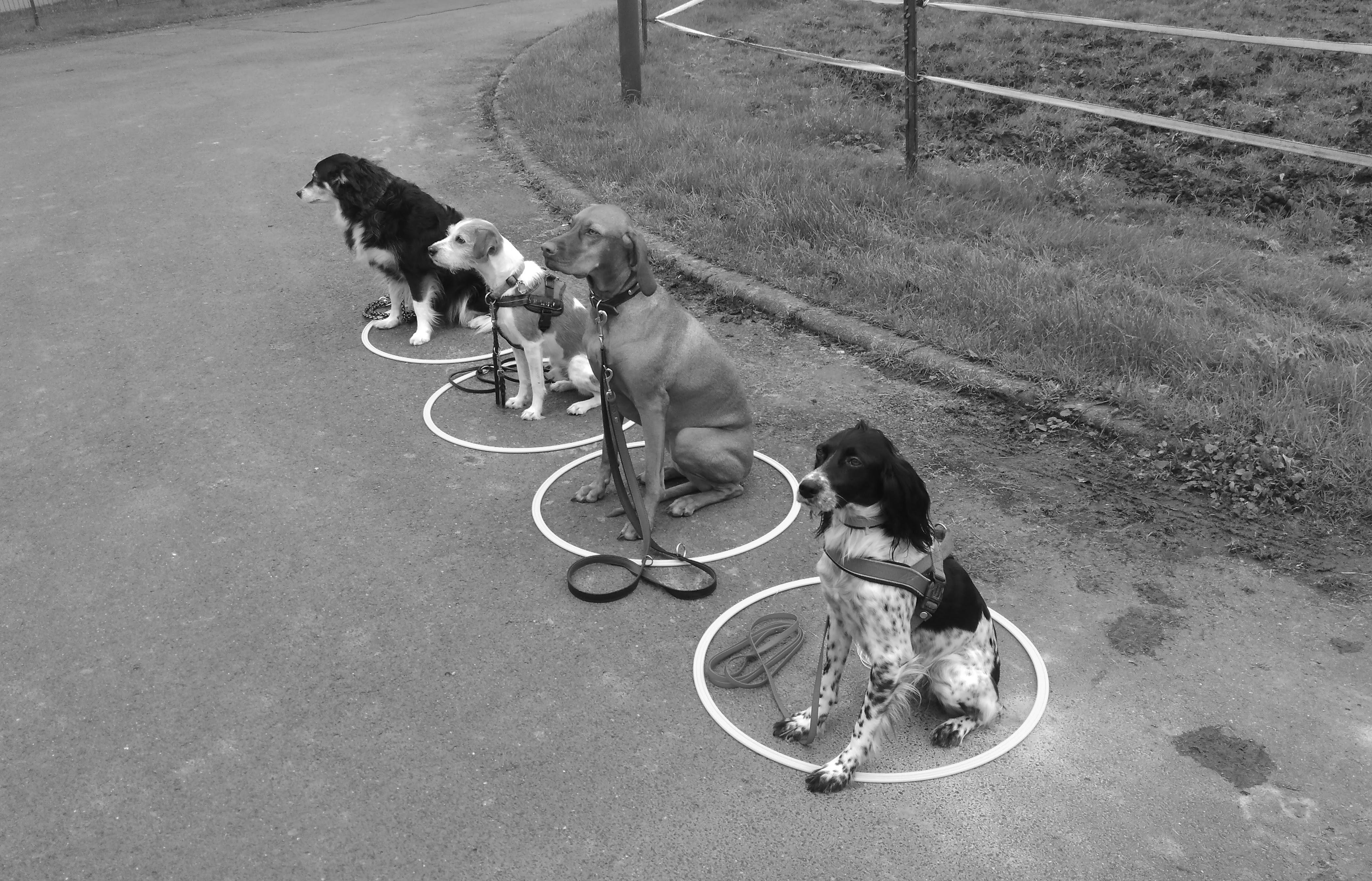 Was Hundeschulen können sollten.